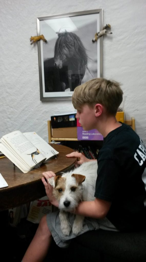 Fiona the emotional support dog loves to help students read.